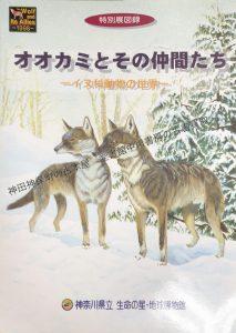 オオカミとその仲間たち.